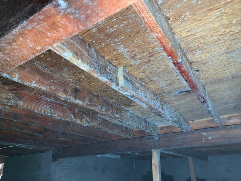 How To Remove Mold From Your Crawl Space Mold Safe Solutions