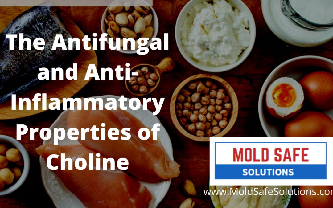 The Antifungal and Anti-Inflammatory Properties of Choline