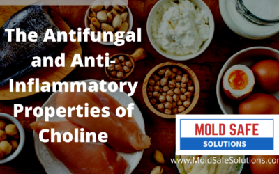 The Antifungal and Anti-Inflammatory Properties of Choline