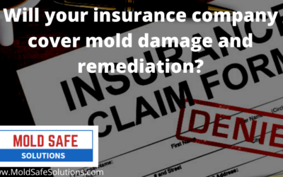 Will your insurance company cover mold damage and remediation?